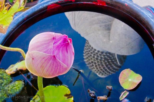 Big Buddha and lotus in a pot. Phuket, Thailand.