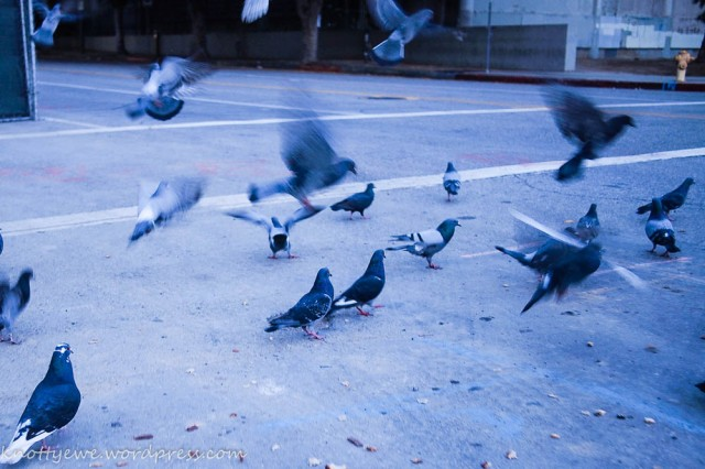 Pigeons having early breakfast at downtown LA.